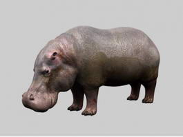 Fat Hippopotamus 3d model
