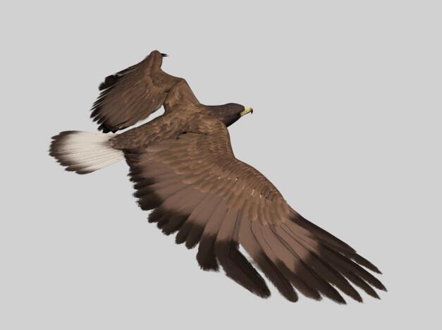 Animated Eagle 3d model - CadNav