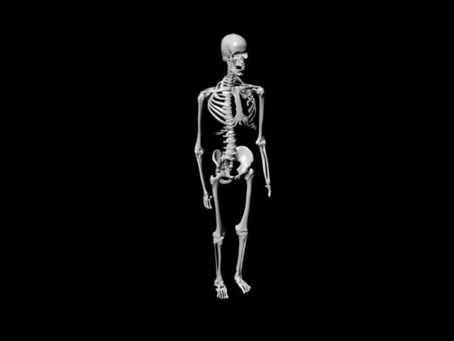 Human Anatomy Skeleton 3d Model Mayaobject Files Free Download