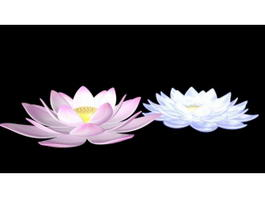 Water Lily Flowers 3d preview