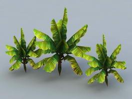 Banana Trees 3d model