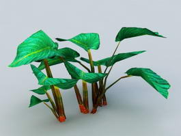 Elephant Ear Plants 3d model