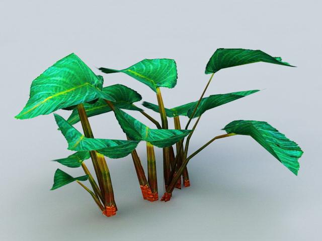 Elephant Ear Plants 3d model