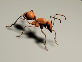 Fire Ant 3d model