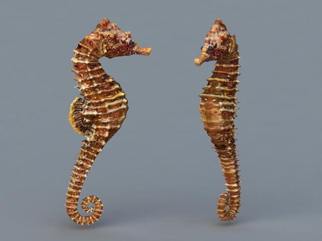 Common Seahorse 3d model