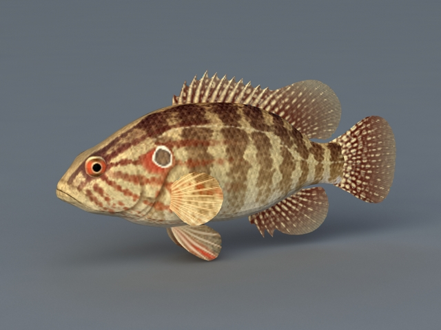 Coreoperca Fish 3d model