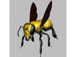 Yellow Fly 3d model