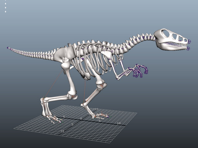 Skeletal Dinosaur Rig 3d model