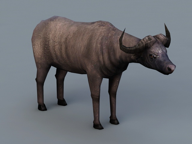Cape Buffalo 3d Model 3ds Max Files Free Download
