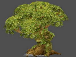 Big Old Tree 3d model