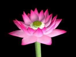 Pink Lotus Flower 3d model