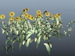 Sunflower Plants 3d model