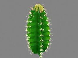 Euphorbia Cactus 3d model
