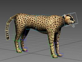 Acinonyx Jubatus Rig 3d model