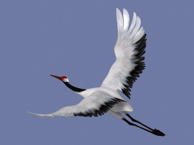 Flying Crane Bird Rigged 3d Model 3ds Max Files Free