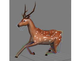 Deer Running Animated & Rigged 3d model