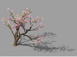 Peach Blossom Tree 3d model