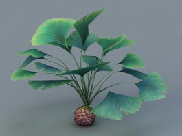 Tropical Broadleaf Plant 3d model