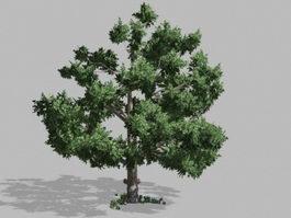Lush Green Tree 3d model