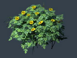 Yellow Flower Bush Plant 3d model