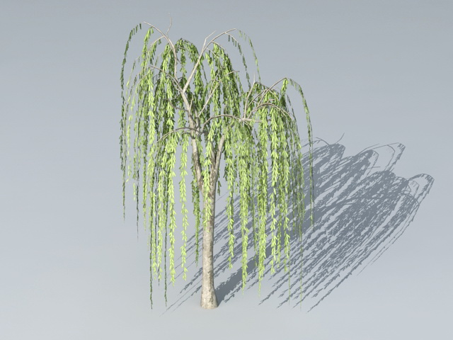 Small Willow Tree 3d model