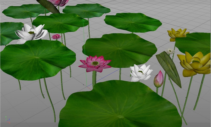 Lotus Flowers and Green Leaves 3d model
