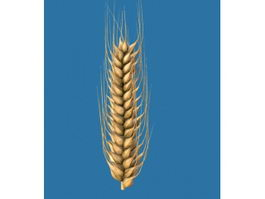 Ear Of Wheat 3d model