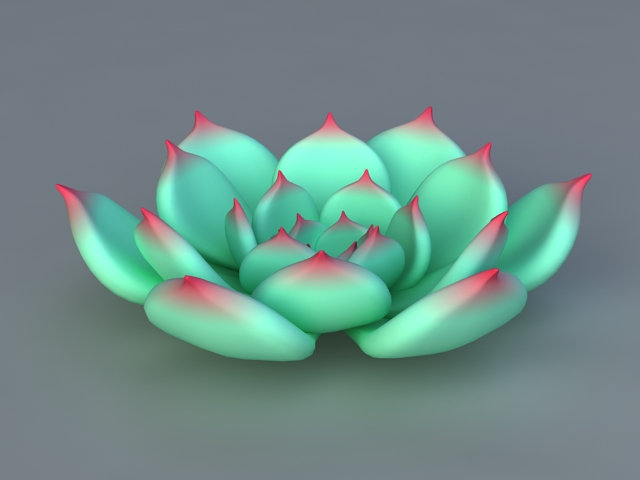 Echeveria Chihuahuaensis 3d model
