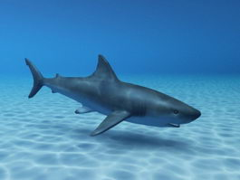 Shark Swimming Ocean 3d model