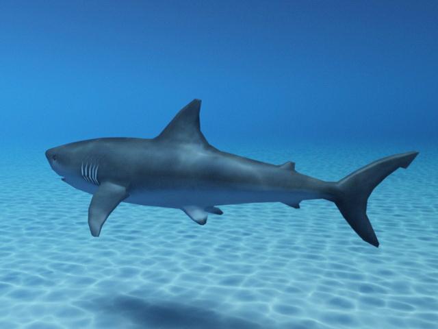 Shark Swimming Ocean 3d model