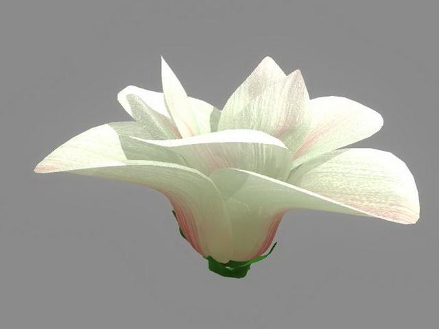 White Flower 3d model