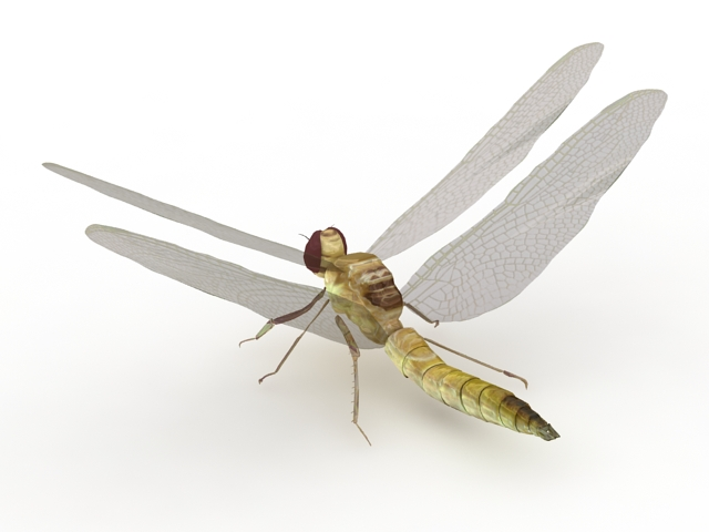 Yellow Dragonfly 3d model