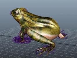 Frog Rigged 3d model