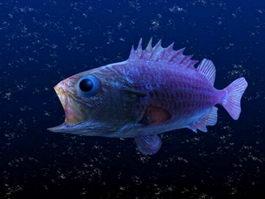 Abyssal Fish 3d model