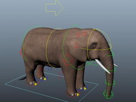 Elephant Rigging 3d model