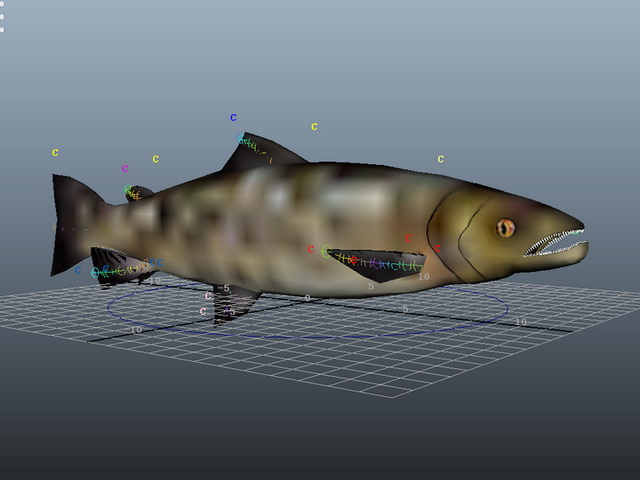 Atlantic Salmon Rig 3d model