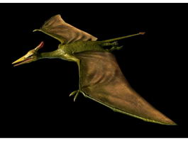 Pterosaur Animation 3d model