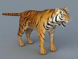 Bengal Tiger 3d model