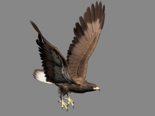 Cadsoft Eagle Free Download - Best Image Konpax 2018