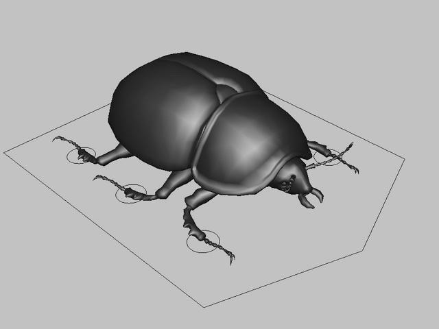 Black Beetle Rig 3d model