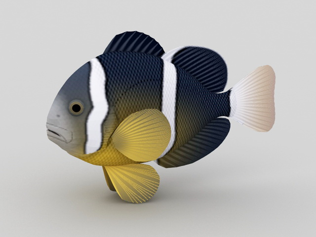 Striped Tropical Fish 3d model