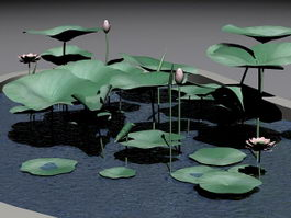 Water Lily Pond 3d model