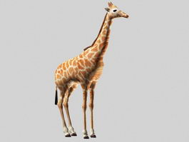 Beautiful Giraffe 3d model