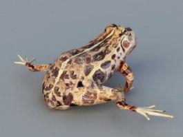Leopard Frog 3d model