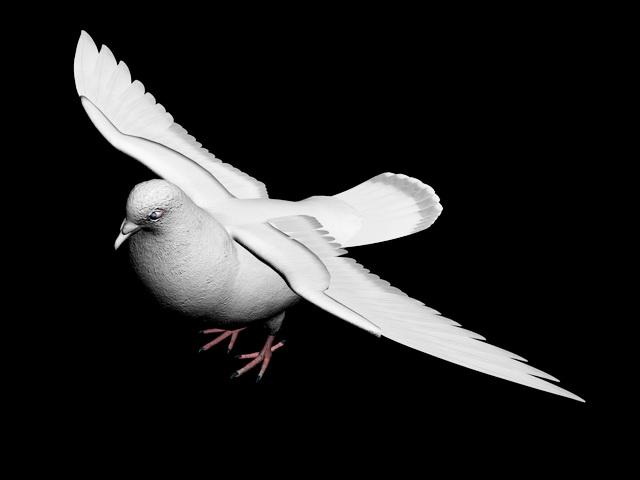 White Pigeon 3d model