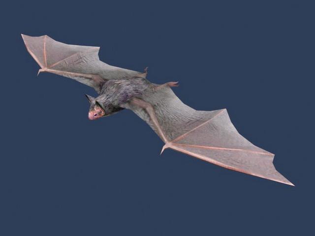 Vesper Bat 3d model