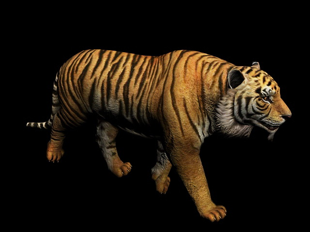 Bengal Tiger Animation 3d rendering
