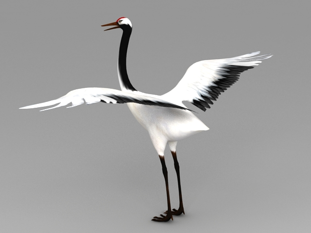Red-crowned Crane 3d model