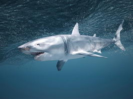 Underwater Shark 3d model