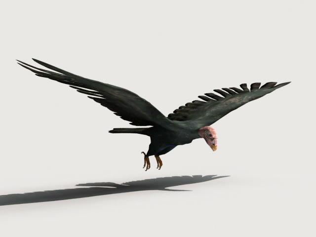 Condor Bird 3d model